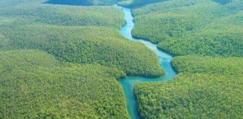 ONDV_Foto_Notícias_0616_Floresta_Amazônia