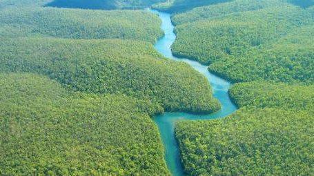 Varejo mostra sua força na defesa da floresta